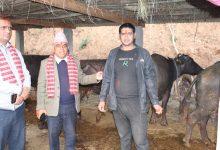 Photo of दुधमा प्रतिलिटर १५ रुपैयाँ अनुदानबाट एघार सय ७६ परिवार कृषकलाई राहत गल्याङ ।